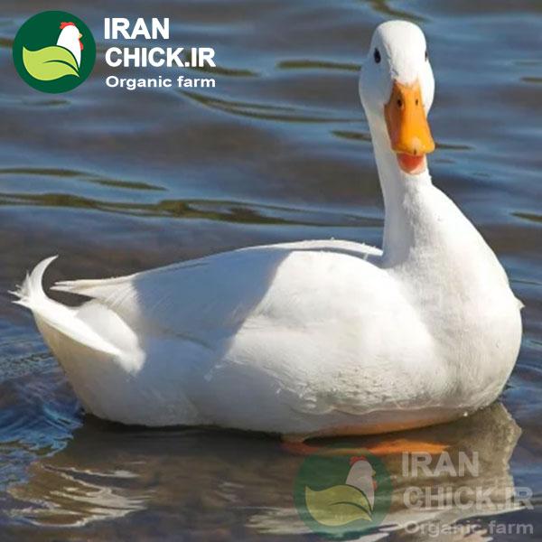 آموزش پرورش اردک ایرانچیک